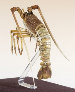 Spiny Lobster, late 19th century