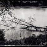 Schuylkill Riverbank (tree in water), Philadelphia. PA