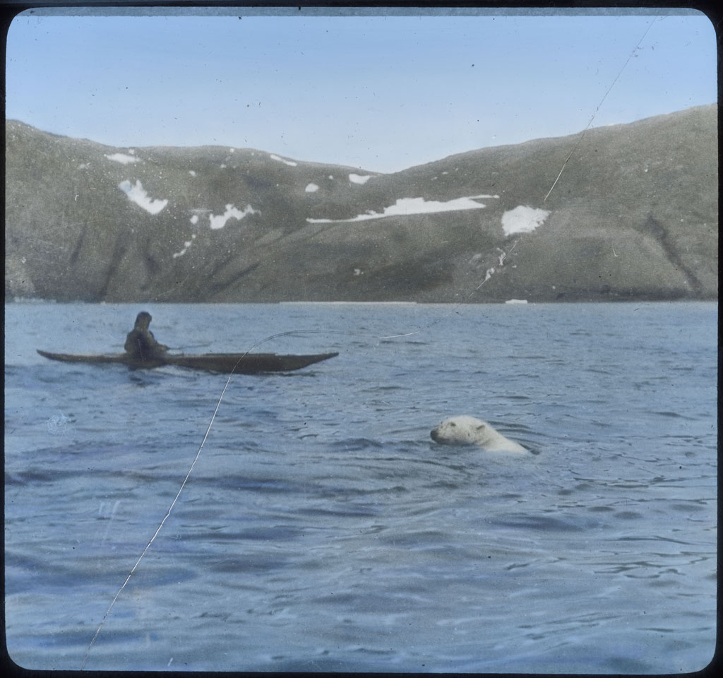 Donald Baxter MacMillan; Polar Bear at Etah; 1913-1917; image; silver gelatin on glass; 10.16 cm x 8.26 cm x 0.64 cm (4 in. x 3 1/4 in. x 1/4 in.); TGM; North America