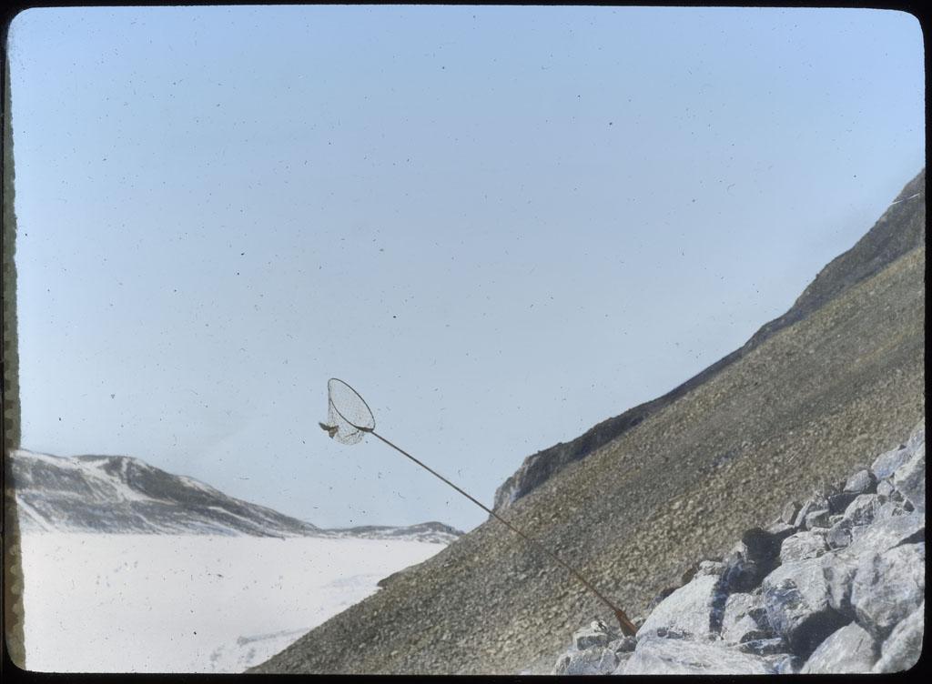 Donald Baxter MacMillan; Netting Dovekies at Etah; 1913-1917; image; silver gelatin on glass; 10.16 cm x 8.26 cm x 0.64 cm (4 in. x 3 1/4 in. x 1/4 in.); TGM; North America