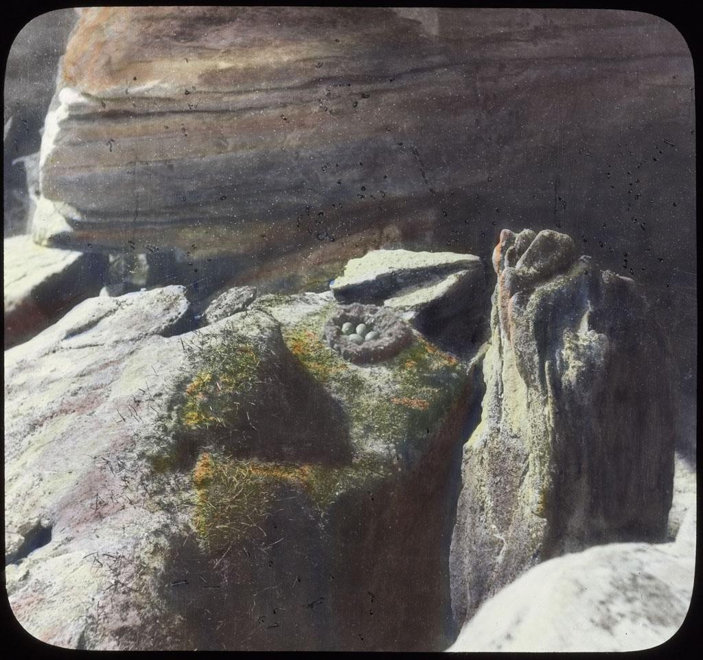 Donald Baxter MacMillan; Eider nest; 1913-1917; image; silver gelatin on glass; 10.16 cm x 8.26 cm x 0.64 cm (4 in. x 3 1/4 in. x 1/4 in.); TGM; North America