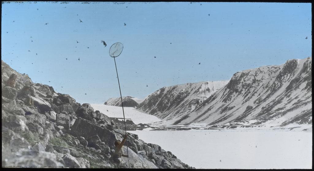 Donald Baxter MacMillan; Dovekies, netting; 1913-1917; image; glass; 8.26 cm x 10.16 cm (3 1/4 in. x 4 in.); TGM; North America