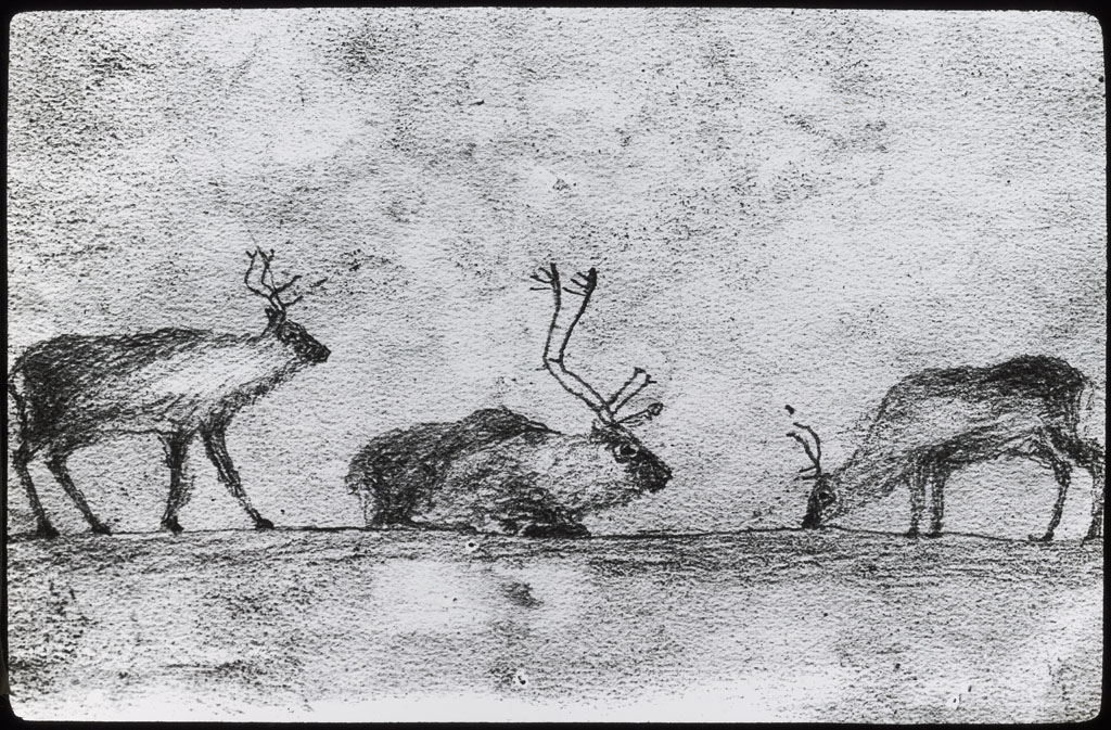 Drawing of Reindeer