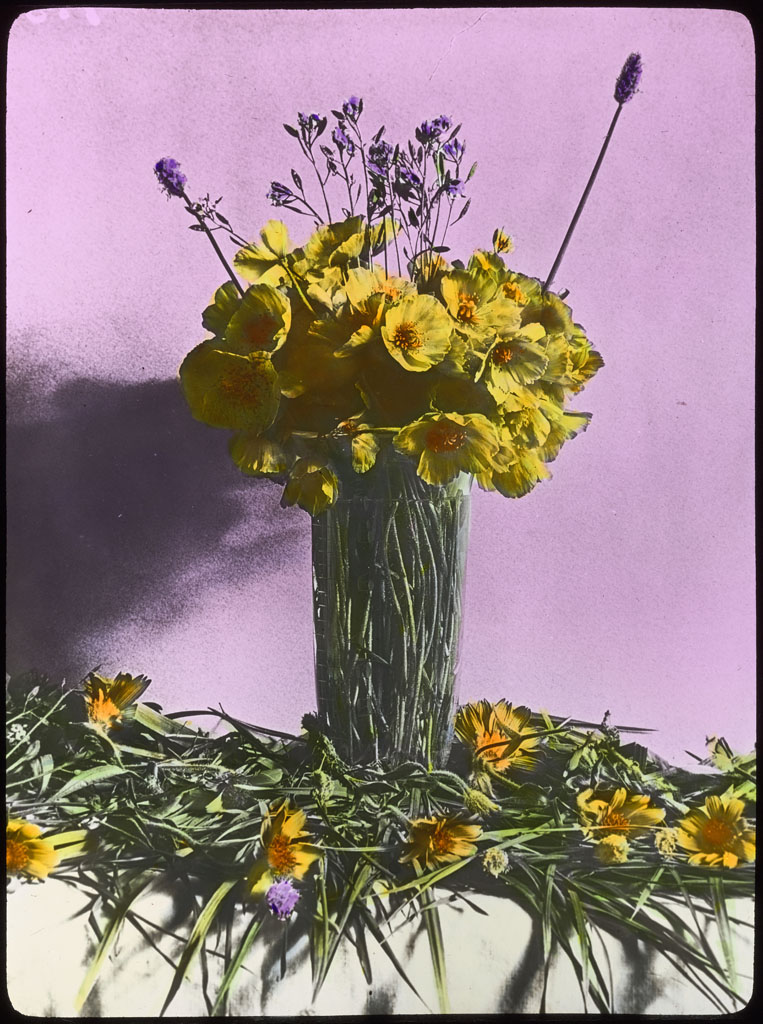 Donald Baxter MacMillan; Arctic Flowers in Vase. Etah, Northwest Greenland; 1913-1917; image; silver gelatin on glass; 10.16 cm x 8.26 cm x 0.64 cm (4 in. x 3 1/4 in. x 1/4 in.); TGM; North America
