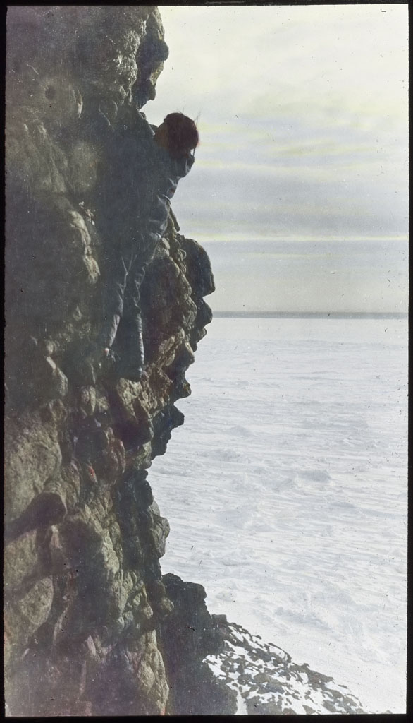 Donald Baxter MacMillan; Climbing Cliff after eggs of Black Guillemot; 1913-1917; image; silver gelatin on glass; 10.16 cm x 8.26 cm x 0.64 cm (4 in. x 3 1/4 in. x 1/4 in.); TGM; North America