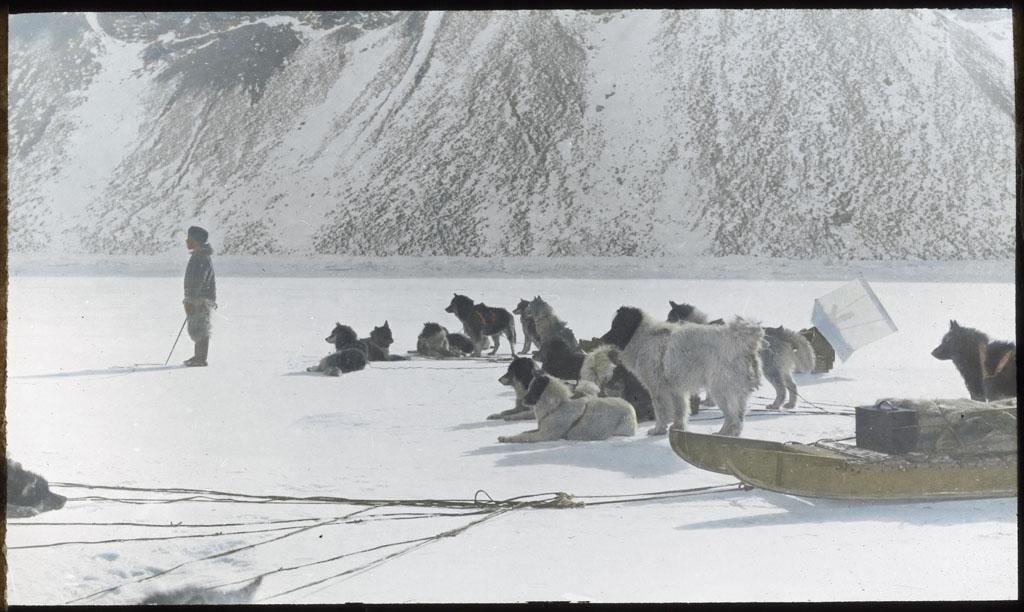 Donald Baxter MacMillan; Dog teams watching man crawling toward seal; 1913-1917; image; silver gelatin on glass; 10.16 cm x 8.26 cm x 0.64 cm (4 in. x 3 1/4 in. x 1/4 in.); TGM; North America