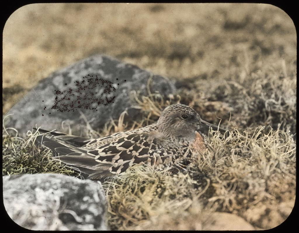 Knot on nest