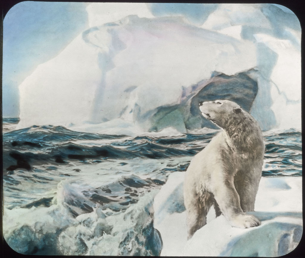 Donald Baxter MacMillan; Polar Bear on drift ice (From painting by Frederick Waugh); image; silver gelatin on glass; 10.16 cm x 8.26 cm x 0.64 cm (4 in. x 3 1/4 in. x 1/4 in.); TGM; North America