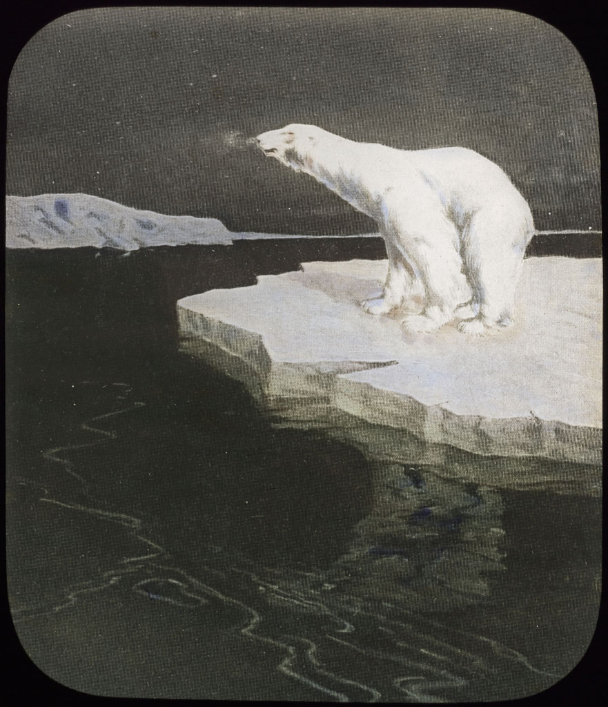 Donald Baxter MacMillan; Polar Bear on drift ice; image; silver gelatin on glass; 10.16 cm x 8.26 cm x 0.64 cm (4 in. x 3 1/4 in. x 1/4 in.); TGM; North America