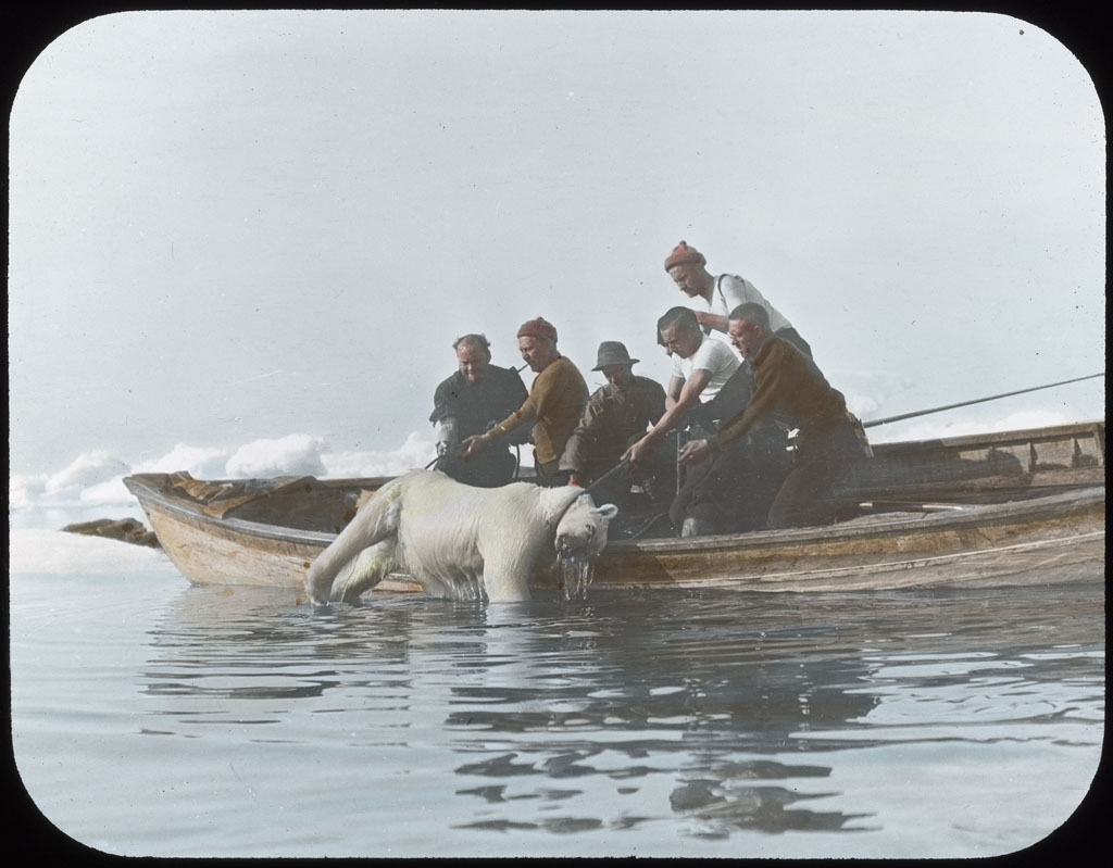 Donald Baxter MacMillan; Pulling Polar Bear into boat - Cape Alexander; 1913-1917; image; silver gelatin on glass; 10.16 cm x 8.26 cm x 0.64 cm (4 in. x 3 1/4 in. x 1/4 in.); TGM; North America