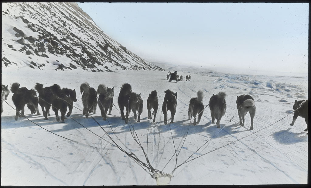 Donald Baxter MacMillan; Fourteen dogs in front of sledge; 1913-1917; image; silver gelatin on glass; 10.16 cm x 8.26 cm x 0.64 cm (4 in. x 3 1/4 in. x 1/4 in.); TGM; North America