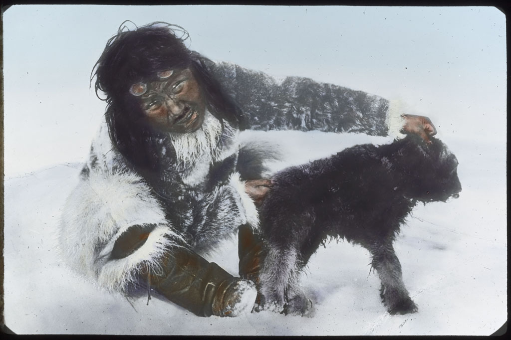 Eskimo [Ule-shark-oo-see] with baby muskox