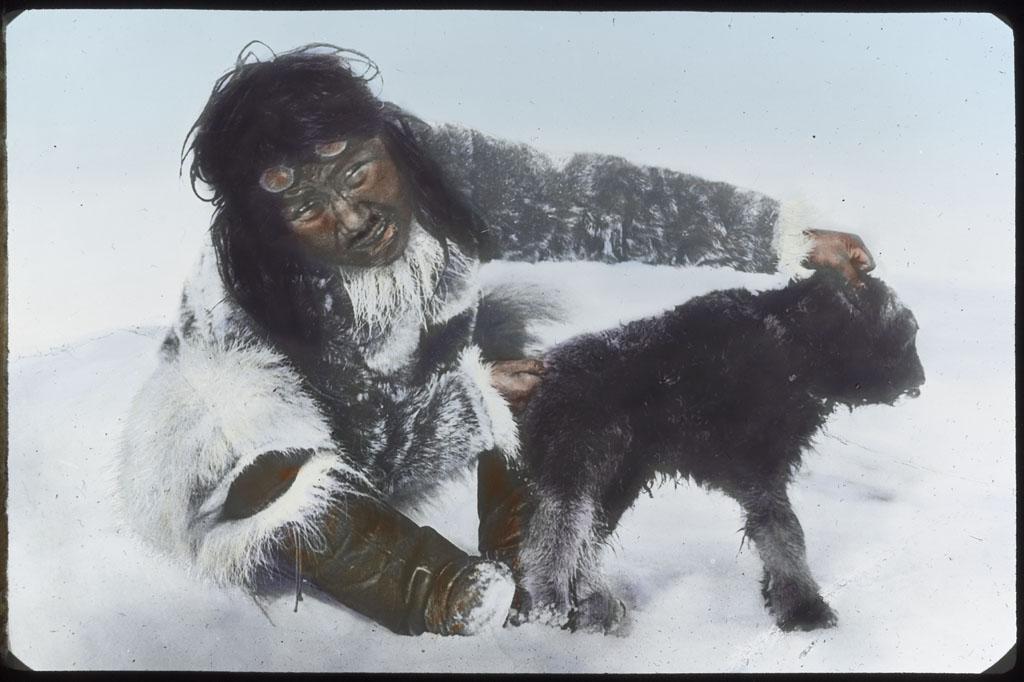 Donald Baxter MacMillan; Eskimo [Ule-shark-oo-see] with baby muskox ; 1913-1917; image; silver gelatin on glass; 10.16 cm x 8.26 cm x 0.64 cm (4 in. x 3 1/4 in. x 1/4 in.); TGM; North America
