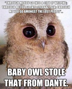 baby-owl-atole-that-from-dante-meme-2021
