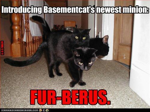 fur-berus