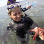 starfish headhsot