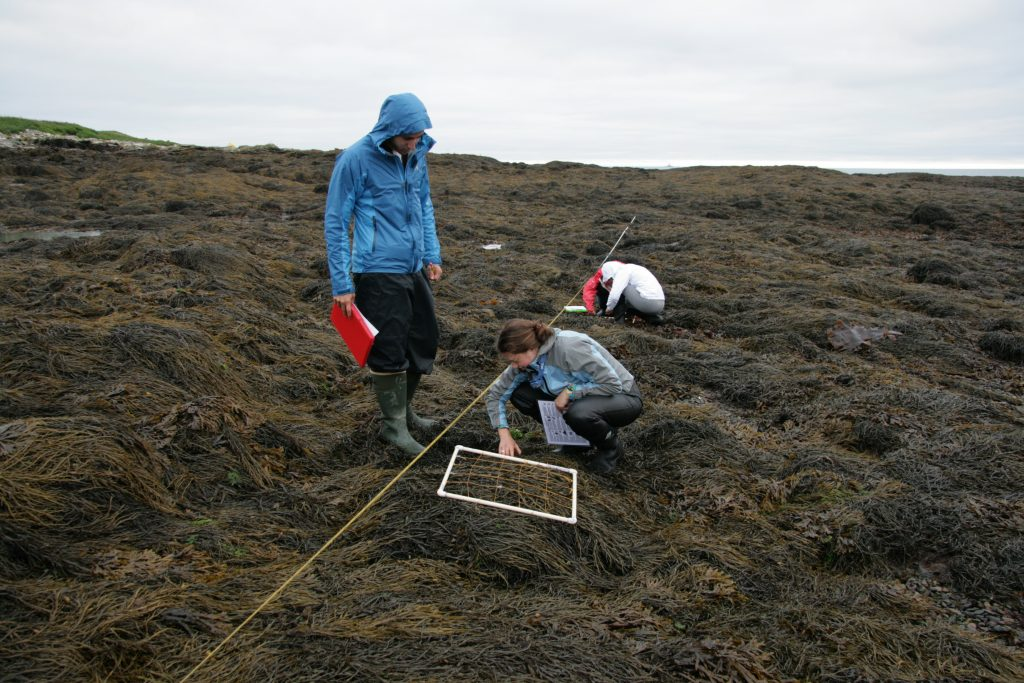 Kent Island intertidal transects